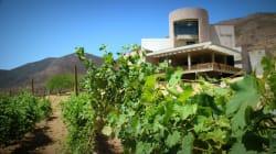 Si políticos con vinícolas cometieron corrupción, con reforma se incautarían sus