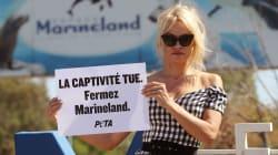 Pamela Anderson protesta en Francia contra cautiverio de