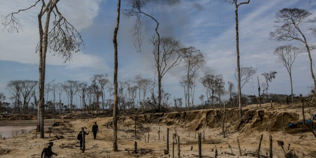 """""""As unidades de conservação correm risco porque aumentam a pressão sobre as áreas de conservação e indígenas"""", diz Michel de Souza, coordenador de Políticas Públicas do WWF-Brasil."""