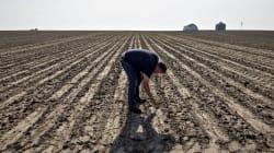 La deportación de migrantes podría 'pegarle' a un sector de la industria agrícola