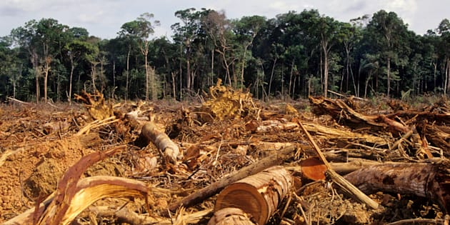 Cadastro Ambiental Rural trará transparência a dados de desmatamento no Brasil.