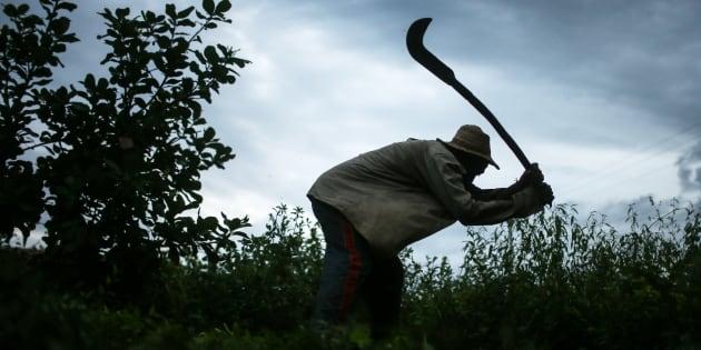 Dados parciais da Comissão Pastoral da Terra (CPT), de julho, já indicavam queda no número de operações de combate ao trabalho escravo este ano.
