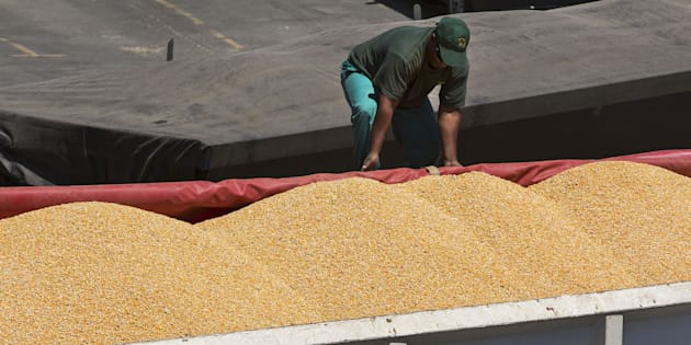 A truck driver secures a cover over his cargo of imported corn maize after loading on the dockside at the city port in Cape Town, South Africa, on Thursday, Feb. 18, 2016.