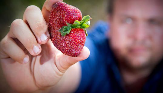 「パックのイチゴに針」事件、50歳女を逮捕 豪警察が発表