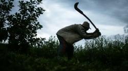 Ministério Público irá retomar investigação sobre trabalho escravo 20 anos após