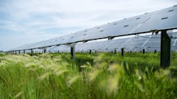 New Technology Needs Government Support. Solar Energy's No