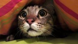 BLOG - Comment vous comporter avec votre animal de compagnie pendant un