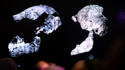 Scientists Find Fossilised Jaw Of 11 Million-Year-Old Human Ancestor In