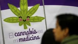 El Congreso y la cannabis medicinal en México: ya basta de