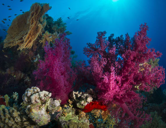 Scientists find 85 miles of hidden coral reef