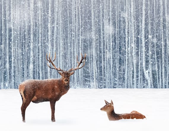 Wild animal population plummets 60 percent