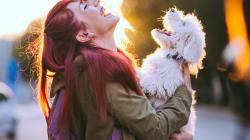Tener perros reduce el riesgo de muerte por