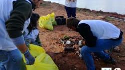 Más de 10.700 voluntarios participan en la campaña 'Un metro cuadrado por la