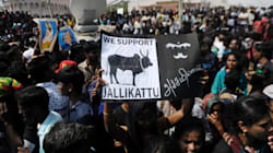 The Jallikattu Fight Should Not Become A Face-Off Between Tamil Culture And Indian