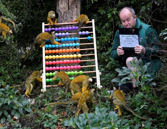 London Zoo kicks off annual animal stocktake