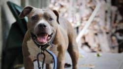 Montréal serre la vis aux propriétaires de chiens et de