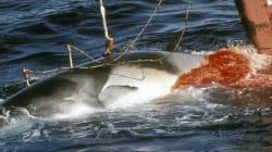 Le Japon compte reprendre la pêche commerciale de la