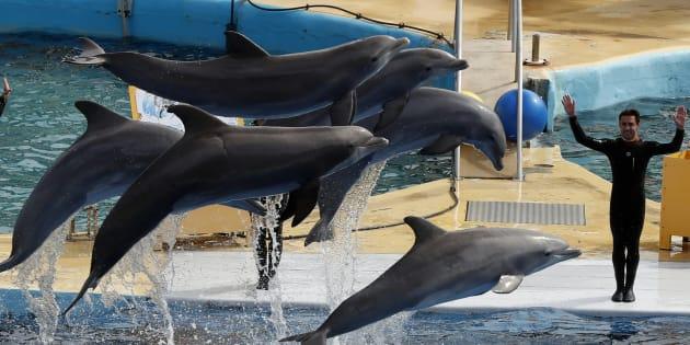Des dauphins au Marineland d'Antibes.