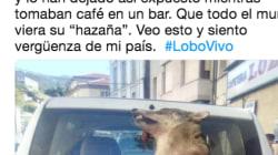 La imagen de este lobo muerto atado a un coche de unos guardas forestales se ha vuelto