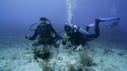 Plongée sous-marine et voyages en compagnie de Pierre-Yves