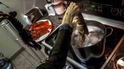 Suíça aprova lei que proíbe fervura de lagostas