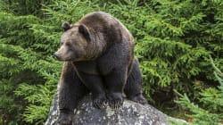 Suède: un employé d'un jardin zoologique est tué par un