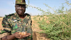 Great green wall: verde in Africa contro la