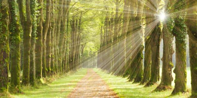 Je n'ai pas tout à fait l'esprit lessivé. Je connais mon temps, mon monde, ses ombres et ses lumières.