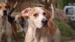 40 perros de caza aparecen envenenados en