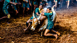 Why The Jallikattu Debate Smacks Of