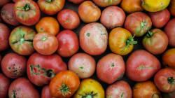 Que faire avec des tomates trop