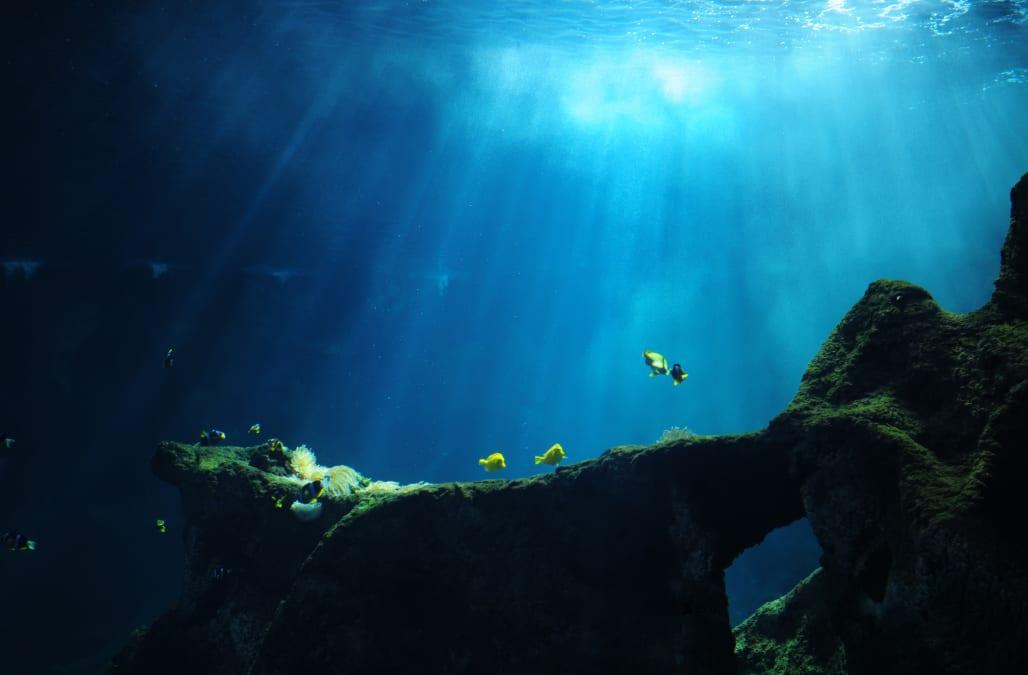 тебя поддержит марианская впадина фото в тихом океане для