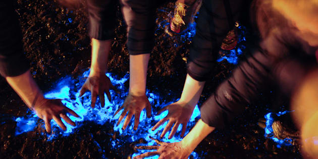 Getting hands on with bioluminescent algae