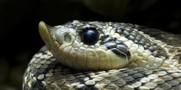 Mississauga man pleads guilty to sneaking snakes across border