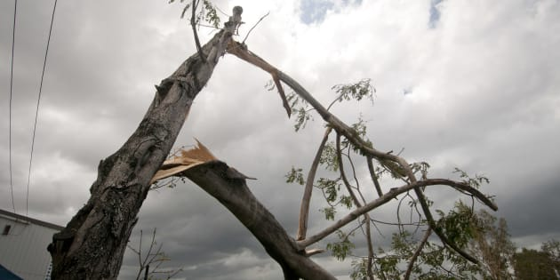 Brisbane residents are cleaning up after wild weather battered the area on Sunday.