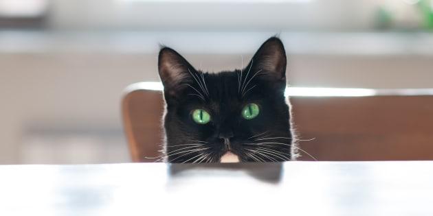 Storia di Milo, il gatto nero e disabile che non riesce a sa