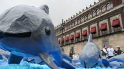 """Gobierno mexicano hará """"un circo"""" de la vaquita marina:"""