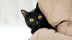 Comment ce petit chat m'a fait revoir mes