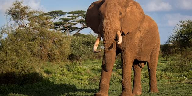 """We need not only recognise how smart they are, but perhaps to demonstrate how smart we are by changing the way we treat elephants, so that these brilliant creatures can live on."""