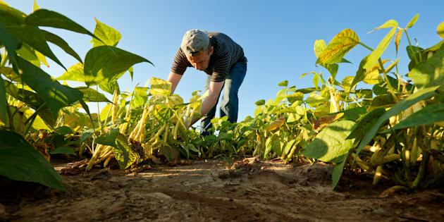Seul François Fillon peut faire de l'agriculture un élément du redressement de la France