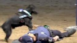 Cuando veas a Poncho en acción, entenderás por qué su vídeo arrasa en