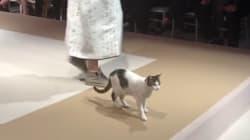 Ce chat s'est incrusté sur le podium d'un défilé de