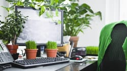 Why Having Indoor Plants Can Be Good For Your