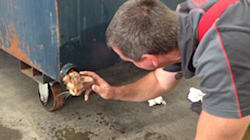 Stray Kitten Saved From Dumpster By Melbourne