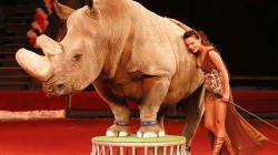 Basta animali nei circhi: il Parlamento approva la