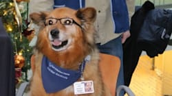 Rusty The Bespectacled Therapy Dog Honoured With