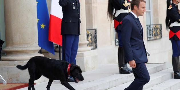 Emmanuel Macron sur le perron de l'Elysée en compagnie de son nouveau chien croisé labrador-griffon noir baptisé Nemo.