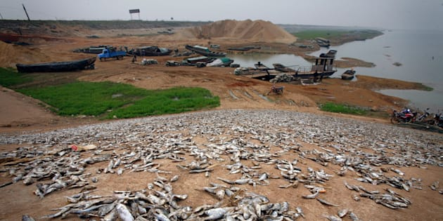 Dead fish on the banks of drought-affected Poyang Lake in 2008. One lifelong fisherman told The Guardian in 2012 that he had not been out on the lake in over a year and had never seen it so dry.