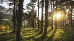 BLOGUE L'environnement: l'incroyable expression de la