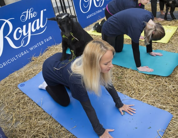 Woman's goat yoga business brings in 6 figures